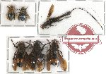 Scientific lot no. 56 Hymenoptera (6 pcs)