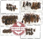 Scientific lot no. 63 Hymenoptera (52 pcs)