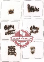 Scientific lot no. 30 Staphylinidae (129 pcs)
