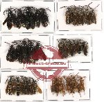 Scientific lot no. 66 Hymenoptera (30 pcs)