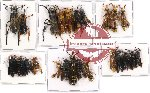Scientific lot no. 64 Hymenoptera (24 pcs A-, A2)