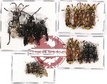 Scientific lot no. 65 Hymenoptera (17 pcs)