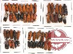 Homoptera Scientific lot no. 14 (54 pcs)