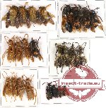 Scientific lot no. 66 Hymenoptera (24 pcs A-, A2)